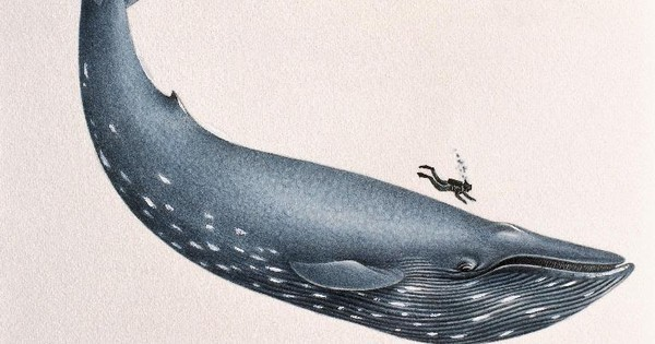 Desktop blue whale size.jpg.600x315 q90 crop smart