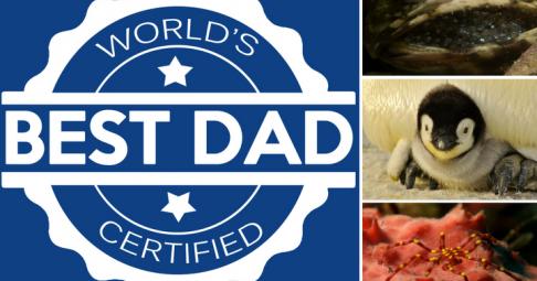 Desktop 1473679276 world best dad underwater