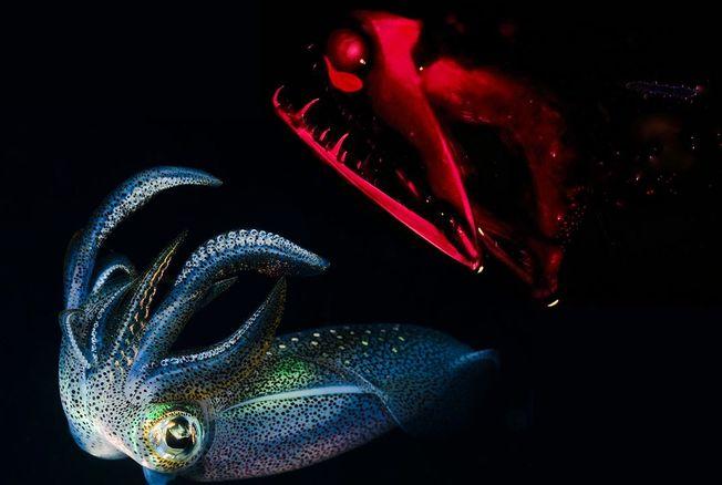 Desktop squid2