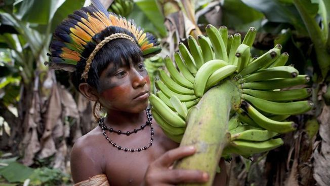 Desktop fruits grow amazon rainforest 602db19d0d43ef42