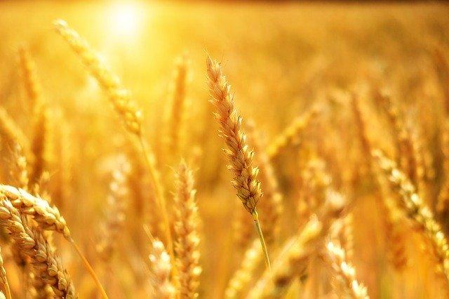 Desktop wheat 3506758 640 bru no pixabay