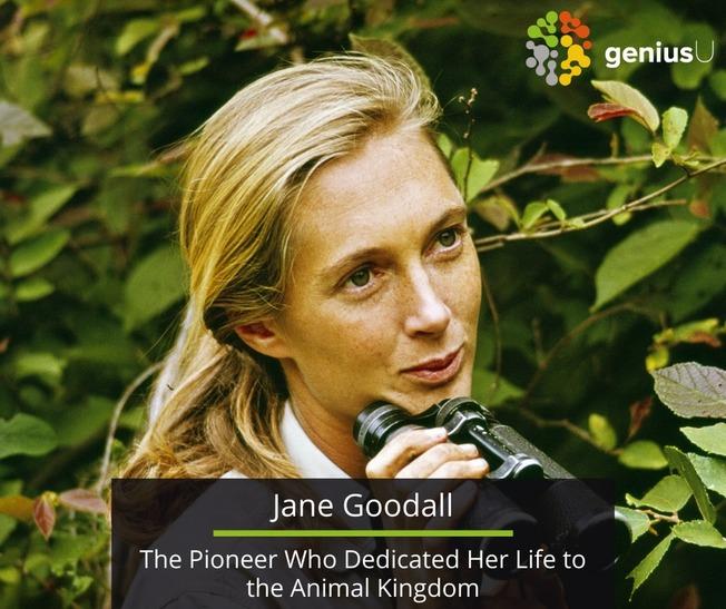 Desktop jane goodall