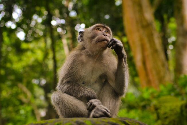 Desktop thinking monkey