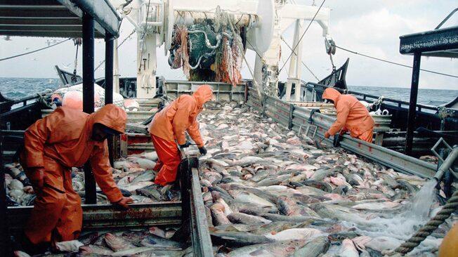Desktop deckload of pacific cod alaska creditsteven kazlowski e465fm 557x313 scaled