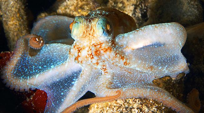 Desktop jeremyshelby octopus may08 stthomas