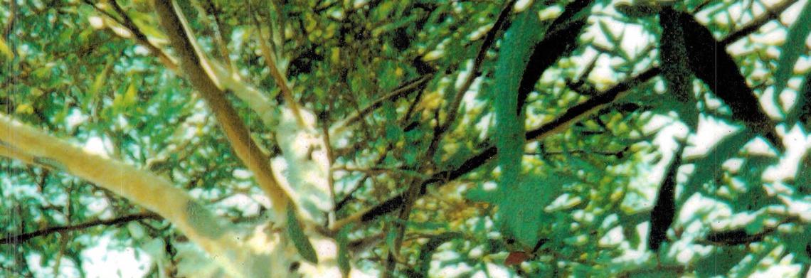 Show beautiful green tree